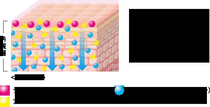 夜用クリームを肌に塗布するとウォーターinカプセルとプラチナウォーター*2が浸透*3うるおいヴェールとプラチナウォーター*2が肌表面を覆い、美容成分を逃しません。